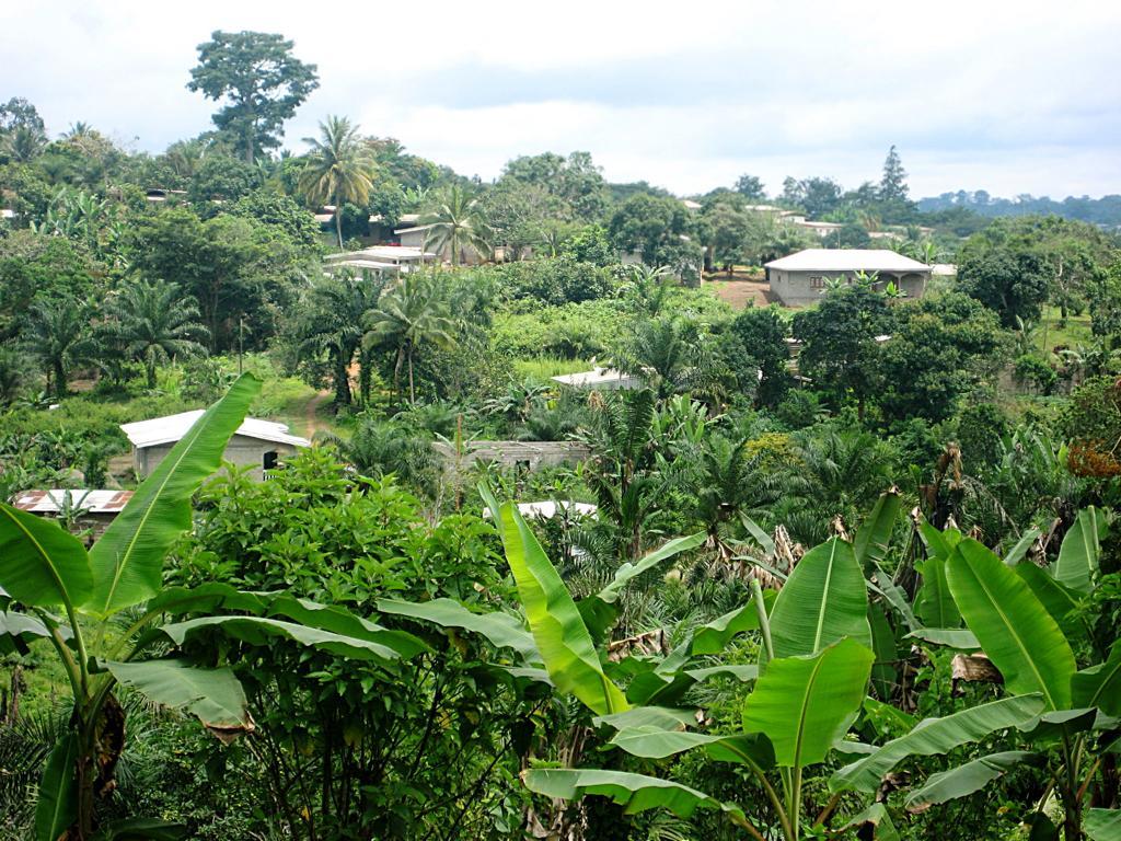 Süden von Kamerun tropische Welt